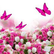 PapillonRose