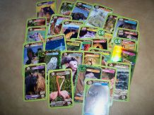lot de cartes animaux