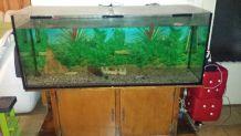 Aquarium 500litres
