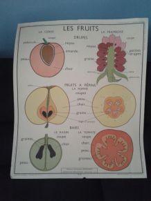 Illustration scolaire les fruits