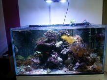 Aquarium 385L