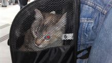 sac à dos pour chat