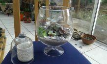 Compositions plantes grasses dans son terrarium
