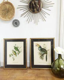 Cadres oiseaux