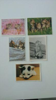Lot de cartes postales chats