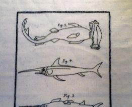 Broderie planche naturaliste Sur toile de Lin